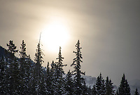 Banff ski trip. Lake Louise as the sun comes up - first run.   ©2019 Karen Bobotas Photographer