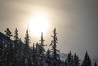 Banff ski trip. Lake Louise as the sun comes up - first run.   ©2019 Karen Bobotas Photographer