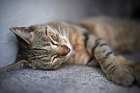 Sleeping Cat at Recoleta Cementery in Buenos Aires, Argentina. Image taken with a Nikon D3s and 50 mm f/1.4G lens (ISO 200, 50 mm, f/1.4, 1/1250 sec).