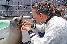 307 Sea Lion Language & Behavior - CA