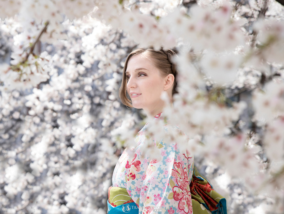 Cherry blossoms in Gion Kyoto