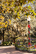 Christmas in Forsyth Park in Savannah, GA.