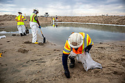A cleanup crew cleans up oil and tar blobs, and shores up a berm that was built to prevent oil from spreading into the Santa Ana River which normally empties into the ocean. An estimated 127,000 gallons of crude oil leaked from an oil derrick pipeline in the Catalina Channel. The oil spread to nearby Huntington Beach beaches and wetlands, and quickly prompted cleanup crews to the scene. Orange County, California, USA
