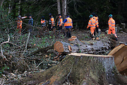 Tree surgeons working on behalf of HS2 Ltd and some of around two dozen security guards leave after felling trees in Denham Country Park for works connected to the HS2 high-speed rail link on 29 September 2020 in Denham, United Kingdom. Anti-HS2 activists based at the nearby Denham Ford Protection Camp, who are trying to prevent or delay the destruction of the woodland, contend that the area of Denham Country Park currently being felled is not indicated for felling on documentation supplied by HS2 Ltd.