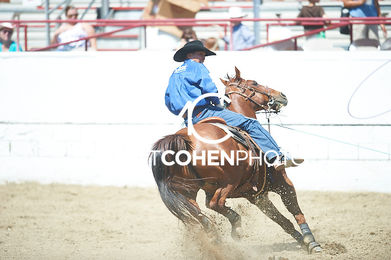Team roper Derrick Begay of Seba Dalkai, AZ competes at the Redding Rodeo in Redding, CA<br /> <br /> <br /> UNEDITED LOW-RES PREVIEW<br /> <br /> <br /> File shown may be an unedited low resolution version used as a proof only. All prints are 100% guaranteed for quality. Sizes 8x10+ come with a version for personal social media. I am currently not selling downloads for commercial/brand use.