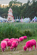 Henham Park, Suffolk, 18 July 2019. The famous dyed sheep - The 2019 Latitude Festival.