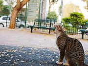 Roaring Alley cat