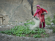 A Wakhi woman put ashes in her field to fertilize it.