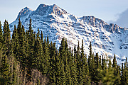 The green boreal forests contrast with an early season snow dusting the Alaskan Range of mountains in Denali National Park, McKinley Park, Alaska