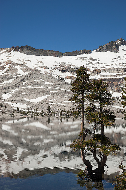 """""""Tree at Lake Aloha 2"""" - This tree was photographed at Lake Aloha in the Tahoe Desolation Wilderness."""