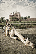 Camel at the Taj Mahal.