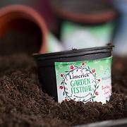Limerick Garden Festival Launch