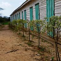 Cnetral America, Cuba, Pinar del Rio, San Luis. Finca Robaina tobacco plantation.