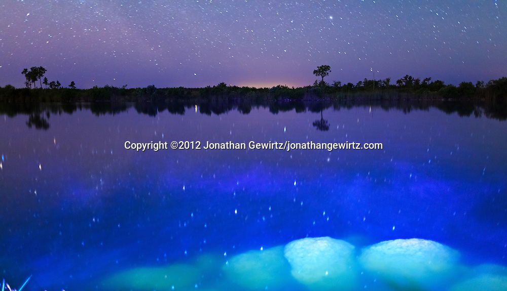 The night sky reflects on the surface of a small lake in Everglades National Park, Florida. WATERMARKS WILL NOT APPEAR ON PRINTS OR LICENSED IMAGES.