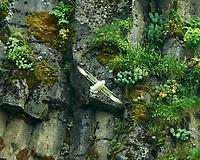 Northern Fulmar (Fulmarus glacialis). Seljalandsfoss. Image taken with a Nikon D4 camera and 80-400 mm VR lens