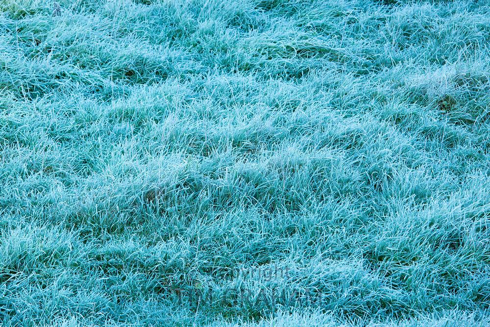 Frosty grass in winter season in England