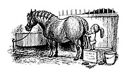 (Girl plaiting ponie's tail)