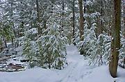 Winter snowfall in forest at Wilson's Falls<br />Bracebridge<br />Ontario<br />Canada
