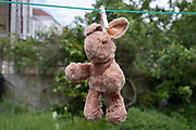 Hanging from a peg, a toy rabbit dries on a back garden washing line after being found to be moth-eaten, then washed, on 6th June 2021, in London, England.
