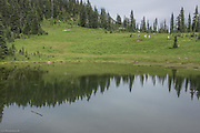 Tarn at the beginning of Naches Peak Loop Trail in Mt Rainier National Park.