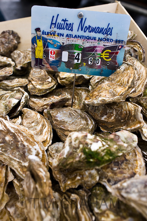 Live oysters, Huitres Normandes, from North Atlantic on sale at farmers market in Normandy, France