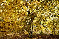 10.2013 Zlota polska jesien w Puszczy Knyszynskiej w woj podlaskim fot Michal Kosc / AGENCJA WSCHOD