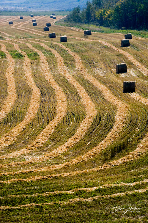 Hay rolls and hay row patterns, Torrington, Alberta, Canada