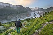 """Photographer, the glacier """"Grosser Aletschgletscher"""" and the mountain peaks of the """"Walliser Fiescherhörner"""" seen from the Aletschwald in July, Valais, Switzerland<br /> <br /> Fotograf mit Kamera und Stativ, der Grosse Aletschgletscher und die Walliser Fiescherhörner im Hintergrund an einem schönen Abend im Juli, Wallis, Schweiz"""