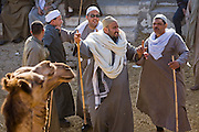 Camel brokers grab each other's robes as conflict erupts after they failed to agree on prices at the Birqash Camel Market outside Cairo, Egypt, where camel broker Saleh Abdul Fadlallah works.   (Abdul Fadlallah is featured in the book What I Eat: Around the World in 80 Diets.)