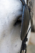 horses eye with blinkers