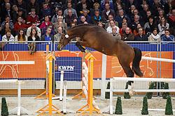 092 - Gregor<br /> KWPN Stallion Selection - 's Hertogenbosch 2014<br /> © Dirk Caremans
