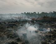 After a first passage of the firefighting brigade, looking at devastation of a pine forest fire on the ground.<br /> Bordeaux, France.