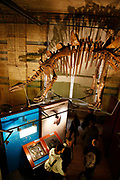The Natural History Museum, London. Visitors in the Dinosaur gallery.