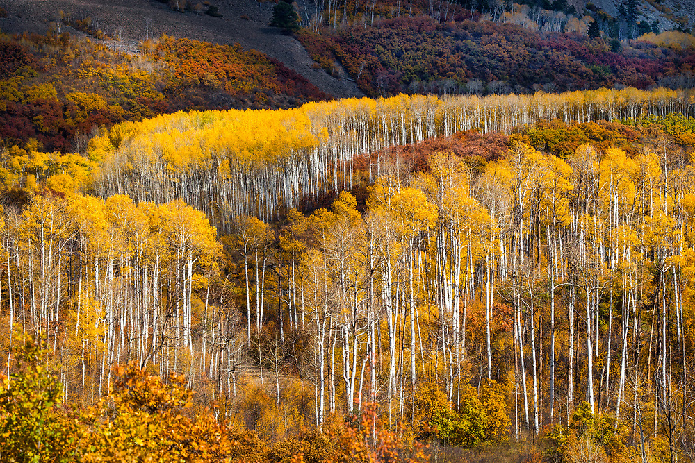 Kebler Pass, Crested Butte - Paonia, Gunnison County, Colorado