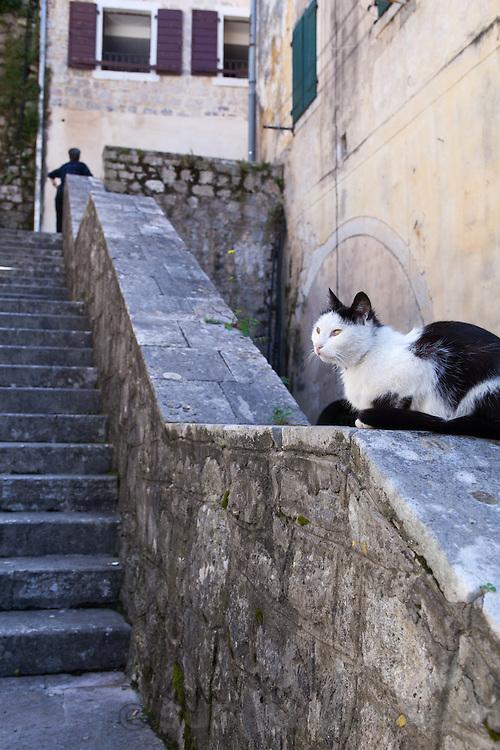 Cat resting in Kotor, Montenegro.