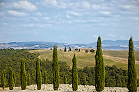 Rows of cypress trees lining the roadway that meanders through Val d'Orcia, a region of Tuscany.
