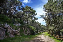 Monti di Cisternino