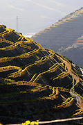 touriga nacional vineyards quinta do seixo sandeman douro portugal