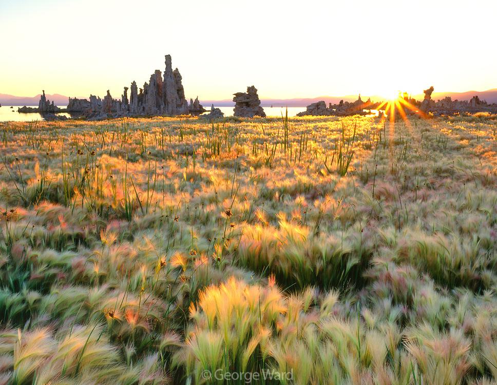 Rising Sun on Wild Barley and Tufa Formations, Mono Lake, Mono Basin National Forest Scenic Area, California