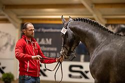 070, Surprice van Koekshof<br /> BWP Hengstenkeuring 2021<br /> © Hippo Foto - Dirk Caremans<br />  11/01/2021