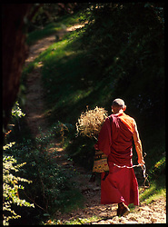 DHARAMSALA, INDIA - A monk follows his path at the Namgyal Monastery in Dharamsala, India. The focus of cultural life in Dharamsala is the Namgyal Monastery, the tantric college which performs rituals with and for His Holiness the Dalai Lama. The Namgyal Monastery was founded by the Third Dalai Lama in the late sixteenth century. Since then, the monastery has exclusively served the Dalai Lamas. A distinctive feature of this monastery is its diversity of practice: prayers and rituals of all the major schools of Tibetan Buddhism are performed by Namgyal monks. The monastery is now situated next to the Tsuglag Khang, or the Central Cathedral, across from the Dalai Lama's residence. Young monks can often be seen studying, and practicing debate in the courtyard leading to His Holiness' residence. At present, the monastery has more than 180 monks, of which the younger monks study the major texts of Buddhist Sutra and Tantra. (Photo © Jock Fistick)