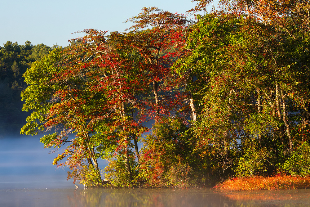Lake Waban in Wellesley showing a magical mixture of early fall foliage color and fog while the nature scenery is painted by the morning light. <br /> <br /> Wellesley Lake Waban nature photography images are available as museum quality photography prints, canvas prints, acrylic prints or metal prints. Prints may be framed and matted to the individual liking and room decor needs:<br /> <br /> https://juergen-roth.pixels.com/featured/lake-waban-fall-foliage-juergen-roth.html<br /> <br /> Good light and happy photo making!<br /> <br /> My best,<br /> <br /> Juergen<br /> Image Licensing: http://www.RothGalleries.com<br /> Fine Art Prints: http://fineartamerica.com/profiles/juergen-roth.html<br /> Photo Blog: http://whereintheworldisjuergen.blogspot.com<br /> Twitter: https://twitter.com/naturefineart<br /> Facebook: https://www.facebook.com/naturefineart<br /> Instagram: https://www.instagram.com/rothgalleries