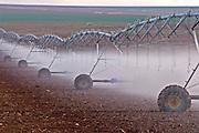 Field irrigation, Israel September 2006