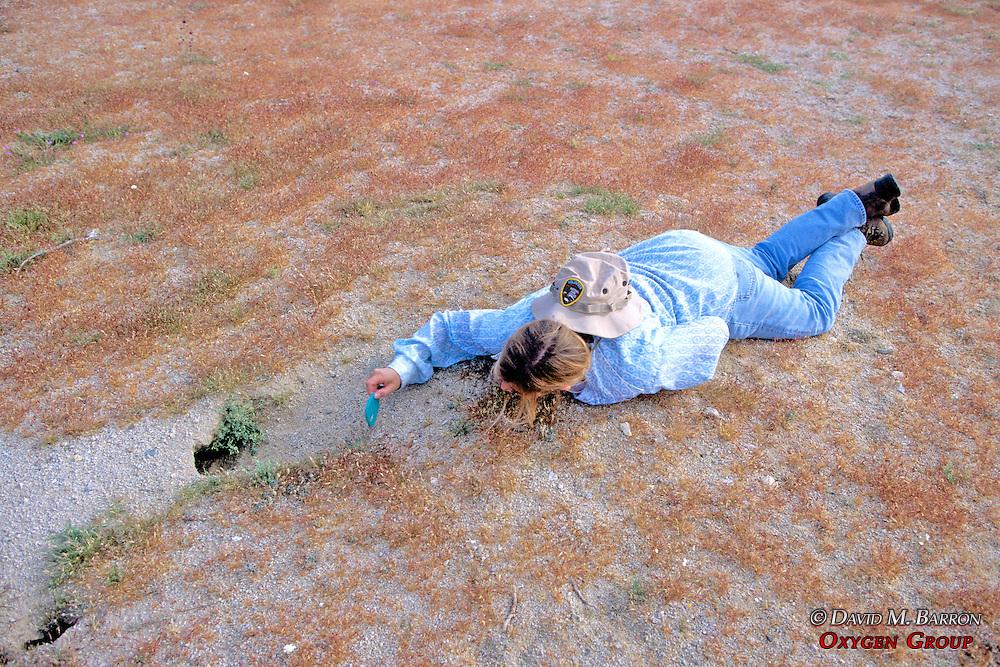 Kathie Meyer Measuring Desert Tortoise Looking Into Borrow Using Mirror