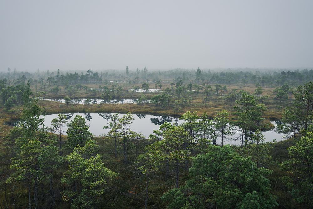 Fog and low clouds over raised bog landscape with scots pines and occasional bog pool, Kemeri National Park (Ķemeru Nacionālais parks), Latvia Ⓒ Davis Ulands | davisulands.com