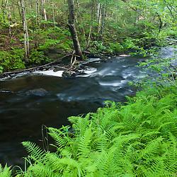 Ferns line Greenough Brook in Errol, New Hampshire.