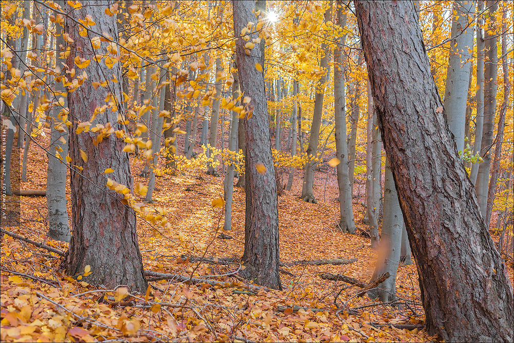 When we were looking for nice mushrooms to shoot I had to capture this beautiful forest as well.