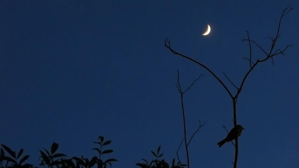 Pájaro y luna / Panamá.<br /> <br /> Edición de 10 | Víctor Santamaría.