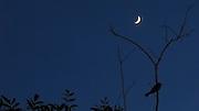 Pájaro y luna / Panamá.<br /> <br /> Edición de 10   Víctor Santamaría.
