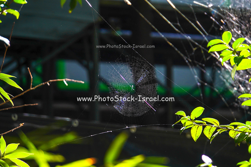 dramatic Intricate spider web in a garden